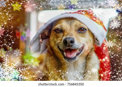 Cute small dog with christmas decoration and hat