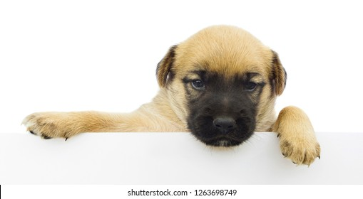 cute small dog or puppy holding empty white banner with space for text