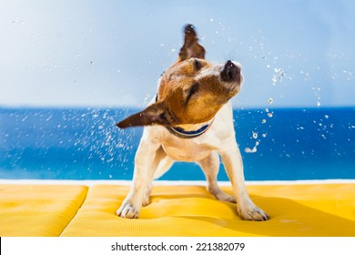 cute small dog shaking at the beach with closed eyes