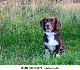 Cute small dog sitting on the grass