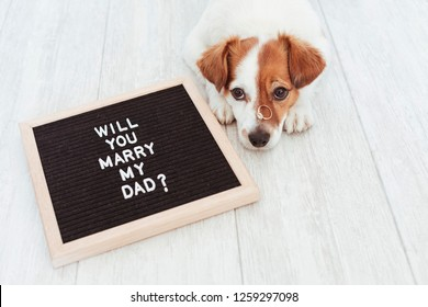 cute small dog with a weeding ring on his head and a vintage letter board with message: will you marry my dad? Wedding concept.Pets indoors