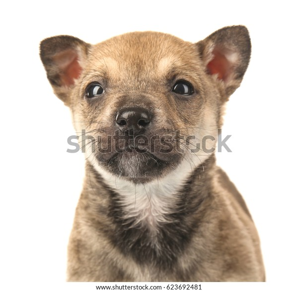 Cute small puppy on white background