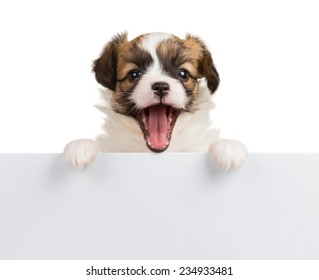 Cute small puppy Papillon with open mouth leans on blank banner