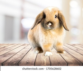 Cute small rabbit on the wooden desk