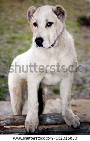 Cute Small White Dog Stock Photo Edit Now 132316853 Shutterstock