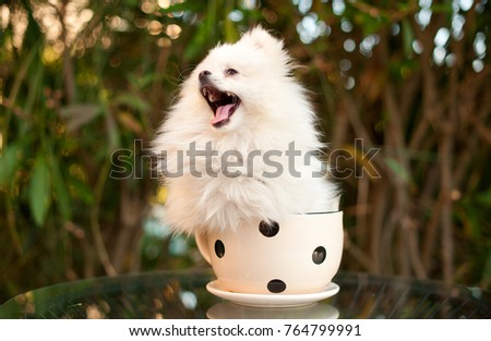 Cute Small White Dog Sitting Pot Stock Photo Edit Now 764799991
