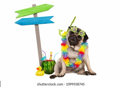 cute smart pug puppy dog sitting down with watermelon cocktail, wearing hawaiian flower garland, goggles and snorkel, next to wooden signpost with arrows, isolated on white background