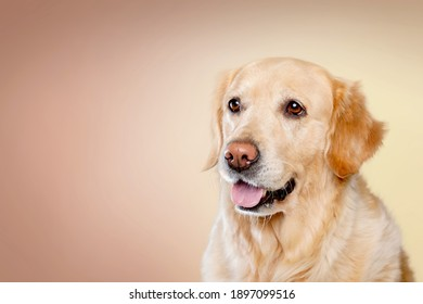 Cute smile happiness friend dog with color background