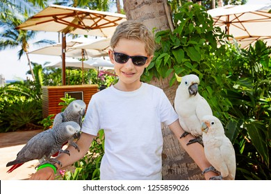 cute smiling boy holding parrots enjoying tropical vacation