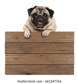 cute smiling pug puppy dog hanging with paws on blank wooden promotional sign, isolated on white background