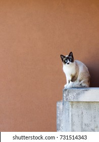 cute soft cat sitting on concrete balcony looking in camera, space for text