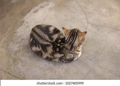 Cute spotted cat