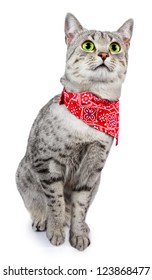 A cute Spotted Cat with Green Eyes and a Red Bandana around her neck