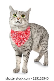A cute Spotted Cat with a Red Bandana