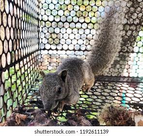 The cute squirrel