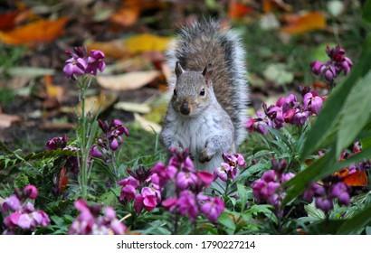 Ich wie squirle Jonathan Widder: