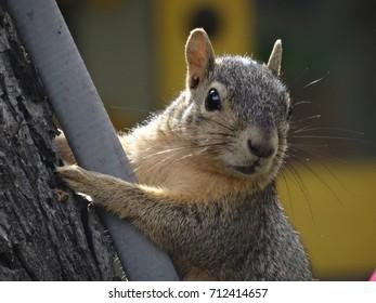 Cute squirrel climbing.