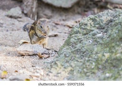 Cute squirrel eating food on ground