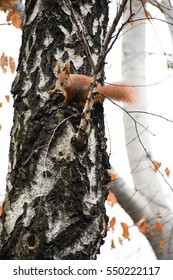 Cute squirrel in the forest