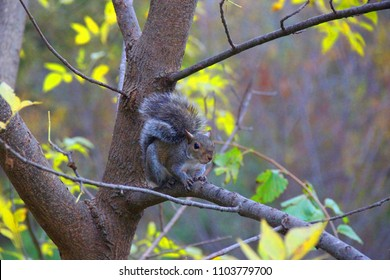 Cute squirrel is sitting on a fall branch