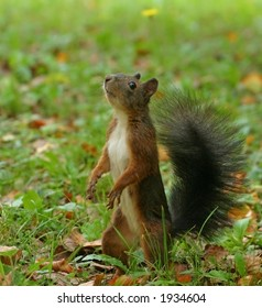 Cute squirrel standing on the grass