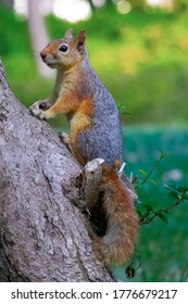 Cute squirrel who is about to go to a tree in Besiktas Yildiz park