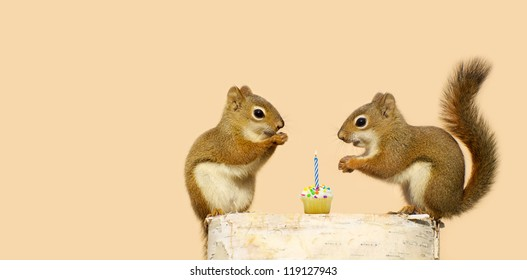 Cute squirrels on a log with the little male giving his sweetheart a birthday cupcake with a candle. Part of a series.