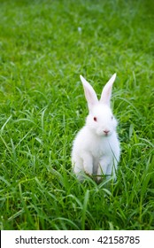 cute standing white rabbit on the grass