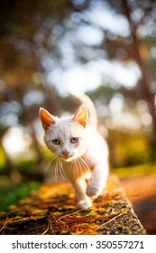 Cute stray cat in the sunset