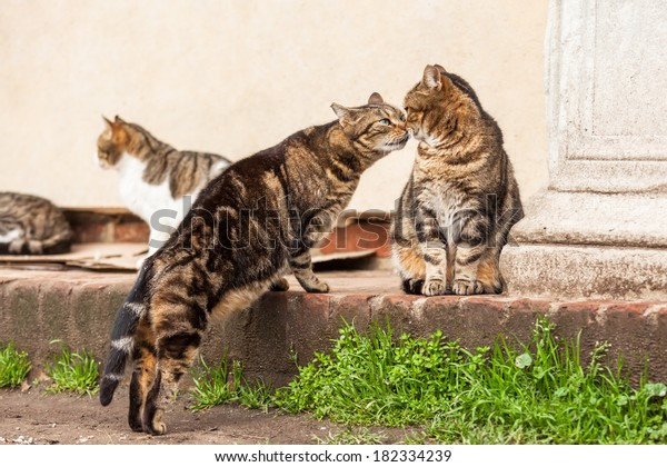 cute stray cats sniffing each other