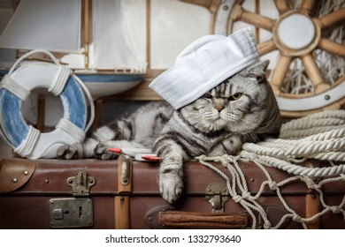 Cute striped cat basking on a suitcase on the window
