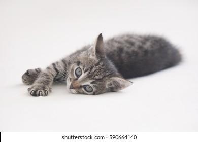 Cute striped kitten lying on light background
