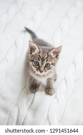 Cute striped kitten sitting on white knitted background