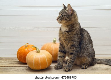 Cute stripes cat and pumpkin on a wooden table on a background of white boards. Space for text.