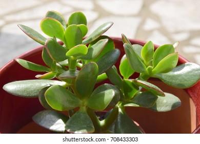 Cute succulent in a sunny day