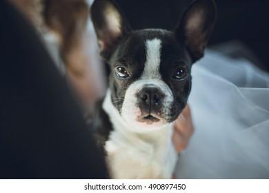 Cute and sweet dog looking ahead