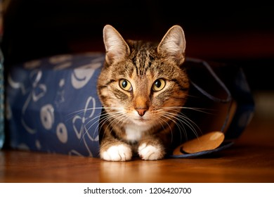 cute tabby cat with attentive eyes sits in a blue bag with christmas decoration on the floor