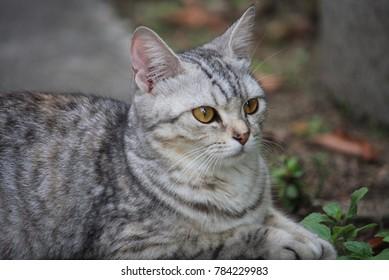Cute tabby cat in the garden.