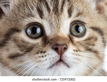 cute tabby cat kitten portrait close up