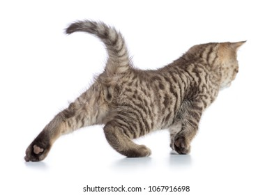 Cute tabby cat kitten stretching on white background