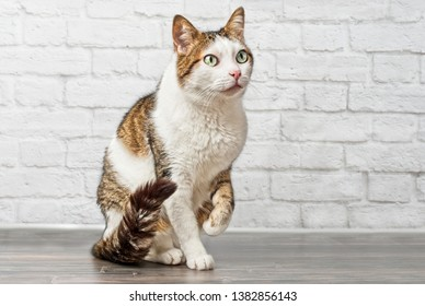 Lifted Paw Images, Stock Photos & Vectors | Shutterstock