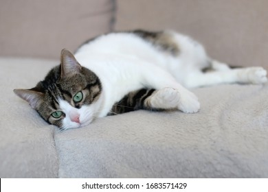 Cute tabby cat lying on a sofa. Selective focus.