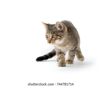 Cute tabby cat playing isolated on white background