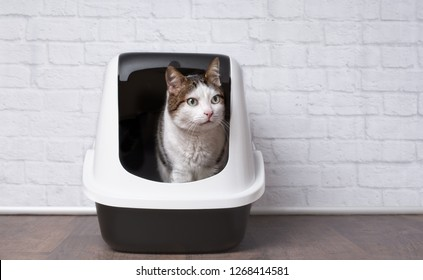 Cute tabby cat sitting in a litter box and looking sideways.