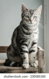 Cute tabby cat sitting and looking on old wood shelf