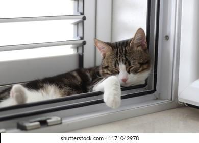 Cute tabby cat sleeping on a window. Selective focus.