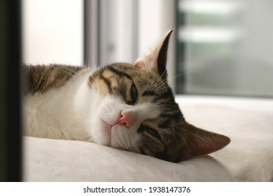 Cute tabby cat sleeping on a pillow. Selective focus.