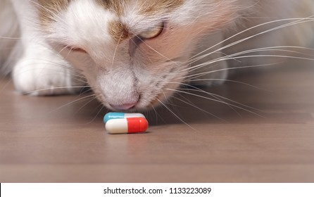 Cute tabby cat sniffs on medicine capsules.