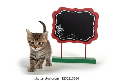 Cute tabby kitten with  blank sign isolated on white background