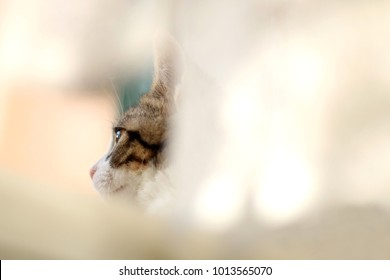 Cute tabby kitten hiding behind the curtains. Selective focus, copy space.